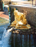 Fountain At Peterhof, St. Petersburg Royalty Free Stock Images