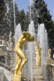 Fountain in Petrodvorets  Royalty Free Stock Photo