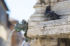 Fountain and pigeon Stock Image