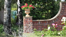 Fountain in the rose garden stock video footage