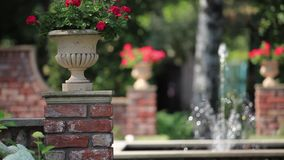 Fountain in the rose garden stock video
