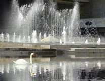 Fountain and swan Royalty Free Stock Images