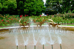 Fountain at Te Awamutu Rose Gardens, Te Awamutu, New Zealand, NZ, NZL. Popular feature of the rose gardens, the fountain symbolises a flight of birds landing on stock images