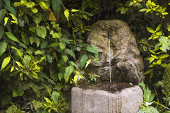 Fountain in thicket of bushes Stock Images