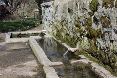 水Fountaining2 库存照片