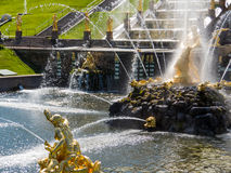 Fountains in Peterhof Stock Image