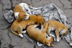 Four abandoned dog siblings stock photography
