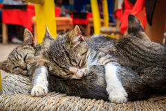 Four adorable kittens sleeping on a chair in Essaouira in Morocc Royalty Free Stock Photography