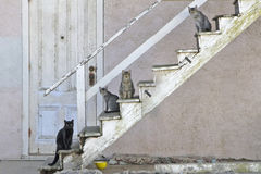 Alley Cats on Stairs. Feral cats living in business district alley with yellow bowl Stock Images