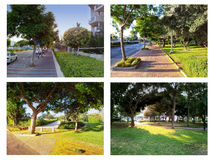 Four alleys of trees Royalty Free Stock Image