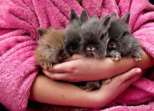 Four Angora bunny. On the hand Royalty Free Stock Photography