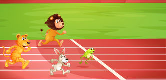 Four animals doing a race Royalty Free Stock Image