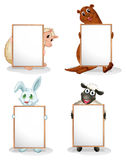 Four animals with empty whiteboards Royalty Free Stock Photos