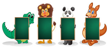 Four animals forming a line with empty blackboards Royalty Free Stock Image