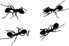 Four ant silhouettes Stock Image