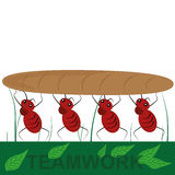 Four ants as a team Stock Image