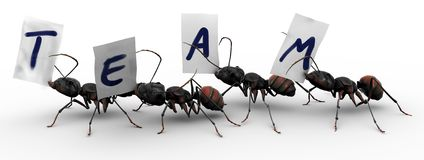 Four Ants Four Ants Team Work Stock Photos