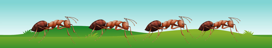 Four ants walking on the grass royalty free illustration