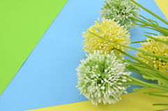 Four artificial green and yellow flower on blue, and yellow background Royalty Free Stock Images