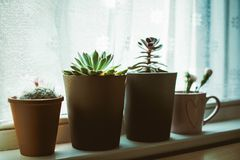 Four Assorted-color Plants on Pots Near Window Royalty Free Stock Photos