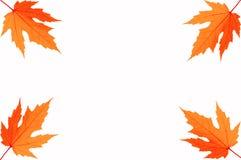 Four Autumn leafs of maple Royalty Free Stock Photos