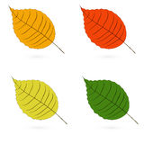 Four autumn leaves of different color. Raster stock illustration