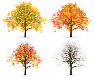 Four Autumn Trees Leaves Color Variation Stock Image