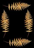 Four Autumnal Ferns. Four golden fern leaves creating a border with a central blank section, over black Royalty Free Stock Images
