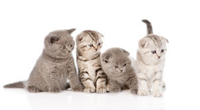 Four baby kittens in front. isolated on white background Stock Photos