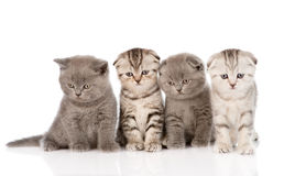 Four baby kittens sitting in front. isolated on white background Royalty Free Stock Photo