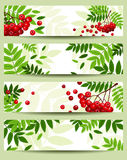 Four banners with rowan branches (468x120px). Royalty Free Stock Image
