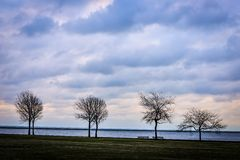 Four Bare Trees Against Ominous Sky. Four trees at the end of Autumn in the lakefront Royalty Free Stock Images