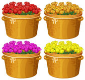 Four baskets of roses in different colors Stock Image
