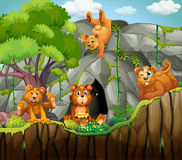 Four bears living in the cave Stock Image