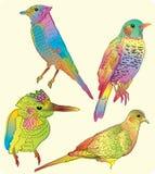Four beautiful birds. Hand drawing illustration Royalty Free Stock Photos
