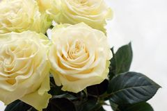 Four beautiful creamy roses in a bouquet close-up. royalty free stock photo