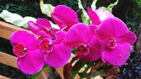 Four beautiful Phalaenopsis side by side royalty free stock photos