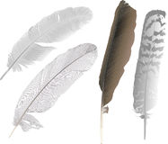 Four bird feathers illustration Stock Image