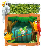Four birds living in the jungle Stock Photography