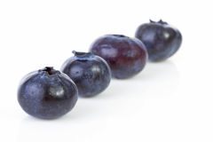 Four black currant berries in a row Stock Photos