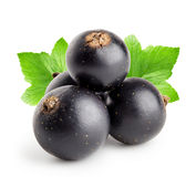 Four black currant with leaf Stock Images