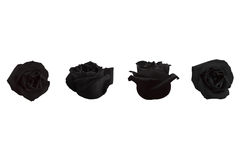 Four Black Roses Royalty Free Stock Photos