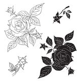 Four black and white roses. Vector illustration. Stock Image