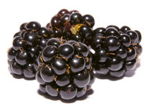 Four blackberries Royalty Free Stock Photos