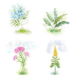Four blooming flowers field. Royalty Free Stock Images