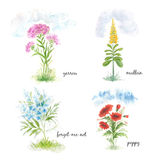 Four blooming flowers field. Watercolor set of herbs and wildflowers Stock Images