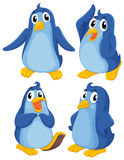 Four blue penguins Royalty Free Stock Photos