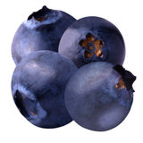 Four blueberries isolated on white background. Isolated fruits. Four blueberries isolated on white background as package design element. Healthy eating stock photos