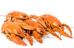 Four boiled crayfish. Many boiled crayfish isolated on white background Stock Photography