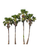 Four borassus flabellifer trees Royalty Free Stock Photography